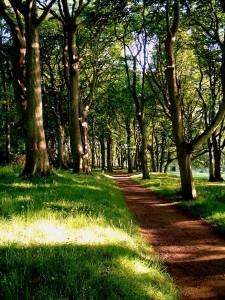 trees-971920_1920