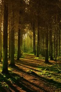 woods-445264_1920